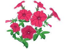 Flower Petunia Stock Illustrations.