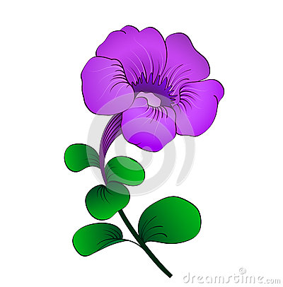 Petunia Isolated Royalty Free Stock Photo.