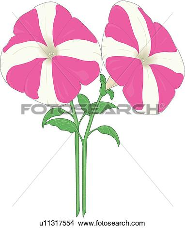 Clipart of Dwarf Petunia u11317554.