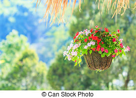 Stock Photo of Petunias in hanging pots.( Petunia hybrida Vilm.
