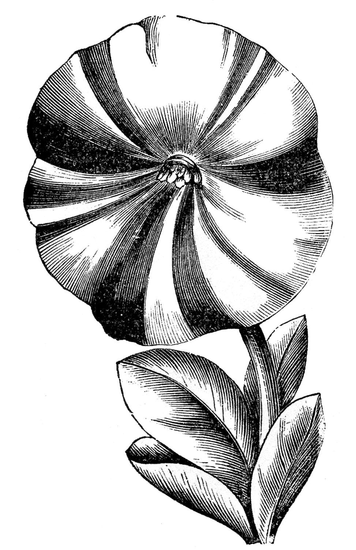 Vintage Floral Clip Art.