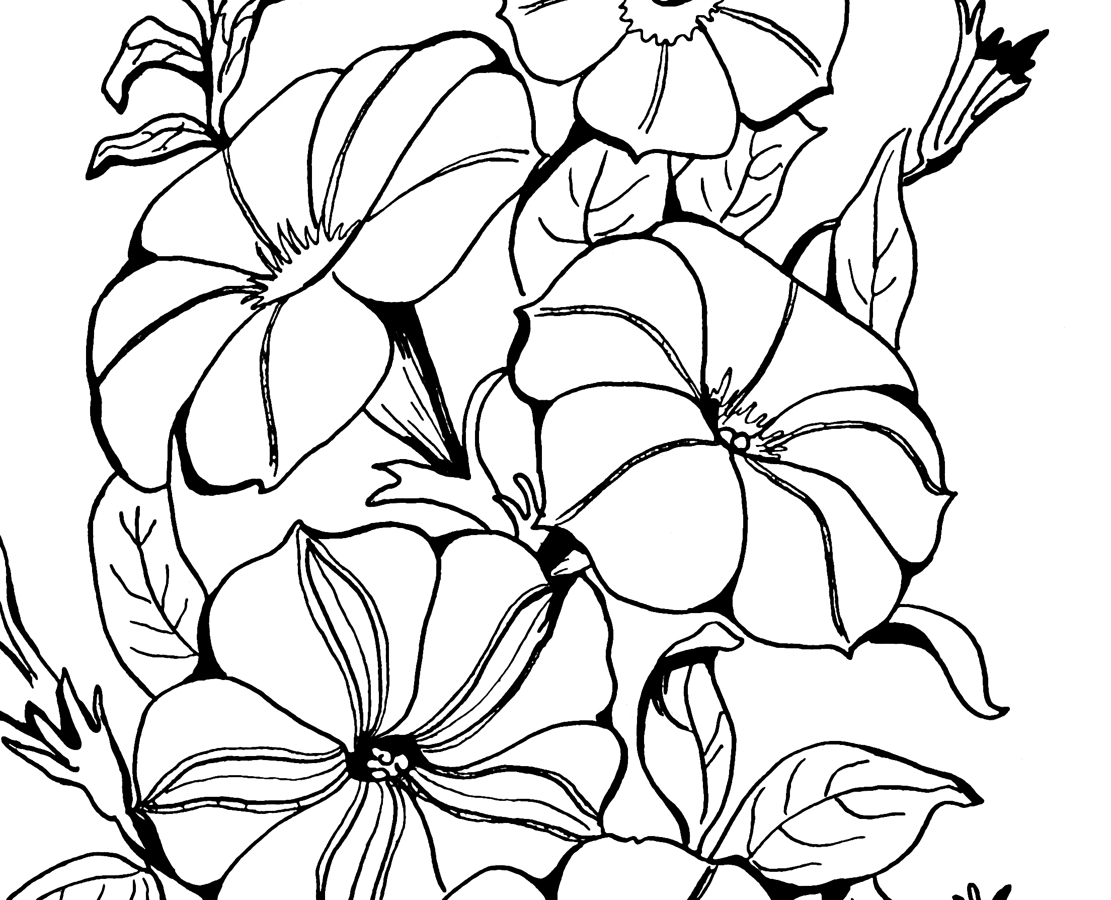 Adult Coloring Page Petunias!.