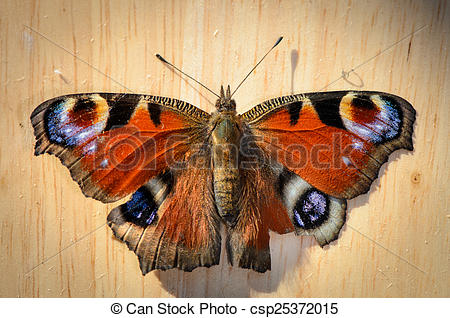 Stock Photography of Butterfly (peacock eye) on wood in top view.