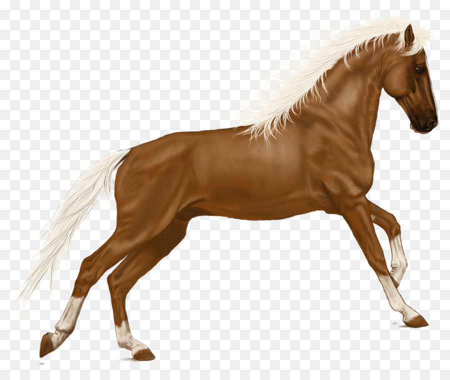 Pferd Pony Portable Network Graphics clipart.
