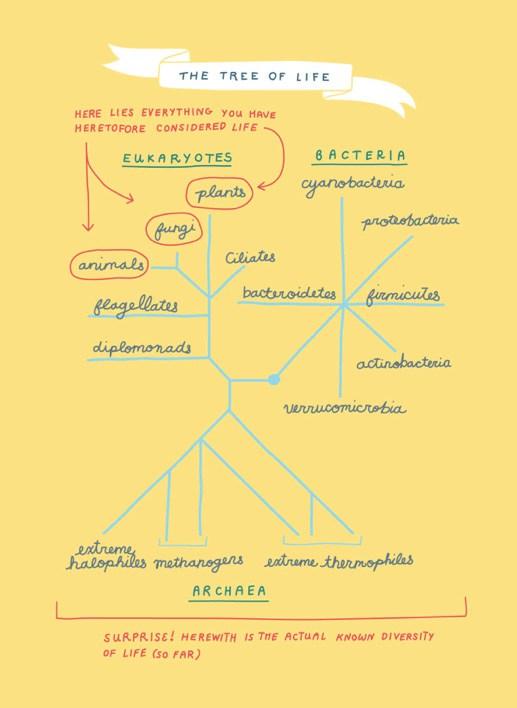 """Über 1.000 Ideen zu """"Que Significa Ecosistema auf Pinterest""""."""