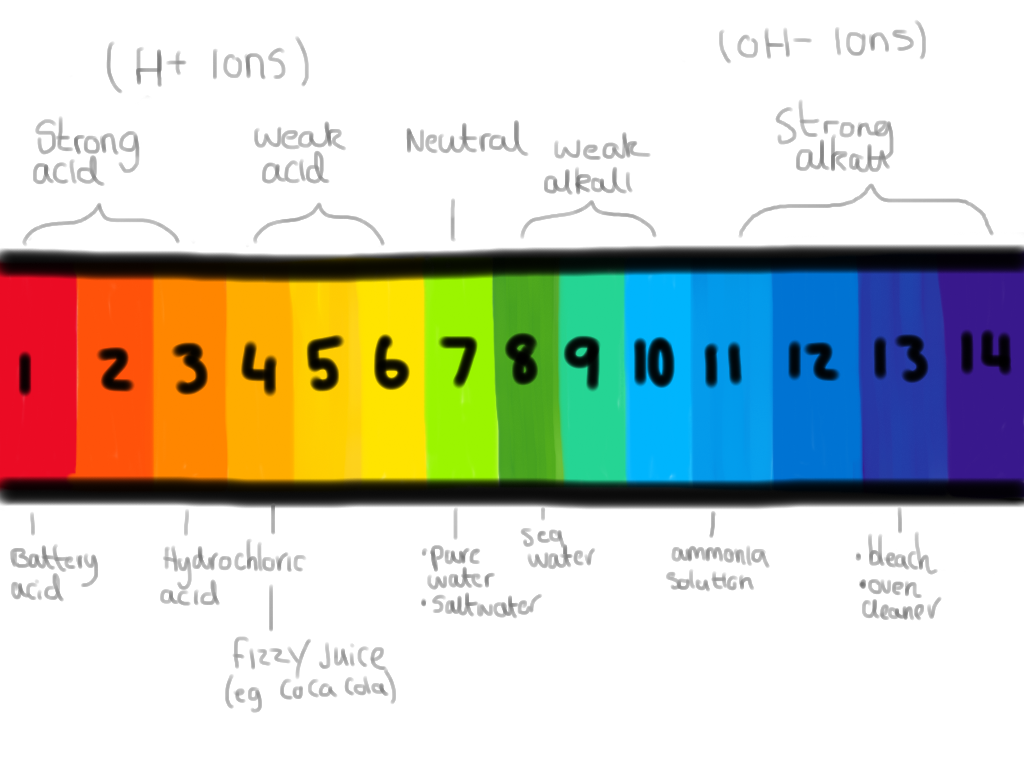 Ph Scale Drawing at GetDrawings.com.