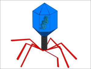 Phage Clip Art at Clker.com.