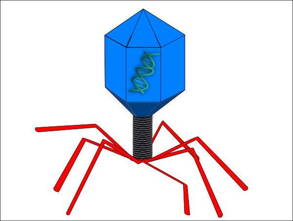 Phage Clip Art at Clker.com.