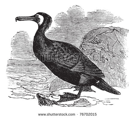Cormorant Fish Stock Vectors & Vector Clip Art.