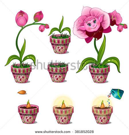 Phalaenopsis Stock Vectors & Vector Clip Art.