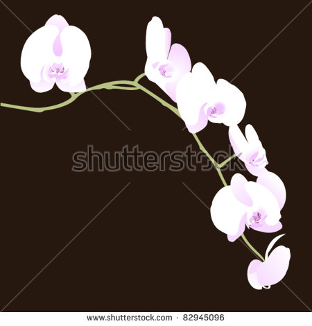 Moth Orchid Stock Photos, Royalty.