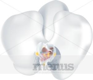 Orchid Menu Templates.