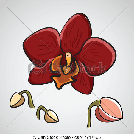Clip Art Vector of Hand drawn orchid.
