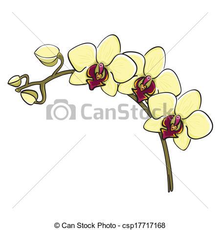 Phalaenopsis Illustrations and Stock Art. 803 Phalaenopsis.