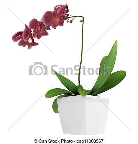 Stock Illustration of Purple phalaenopsis orchid.