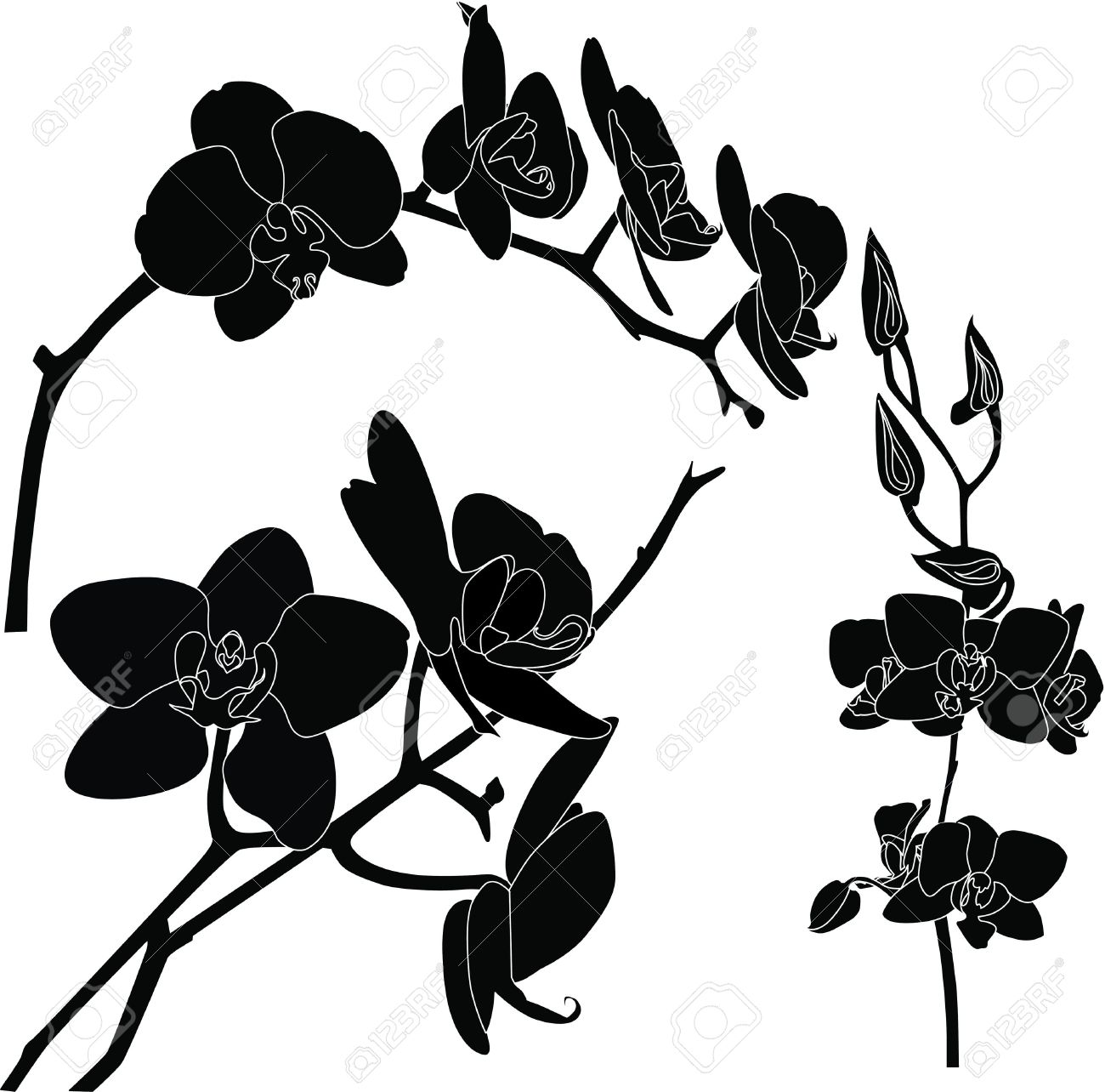 gousicteco: Orchid Clipart Black And White Images.