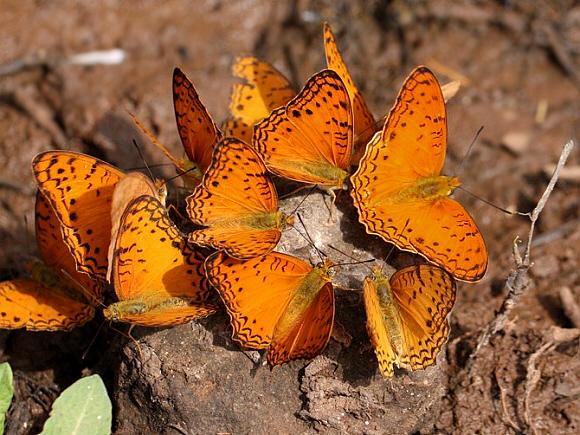 Butterflies of Africa.