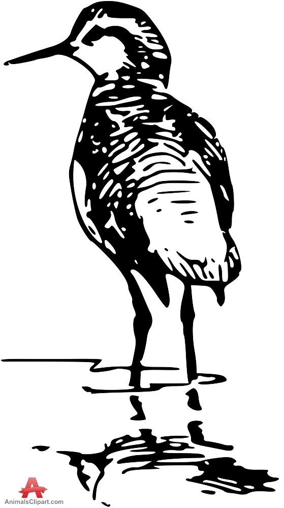 Clipart Drawing of Phalarope Bird.