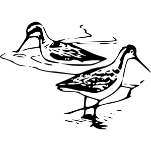 phalarope 3 clipart, cliparts of phalarope 3 free download (wmf.