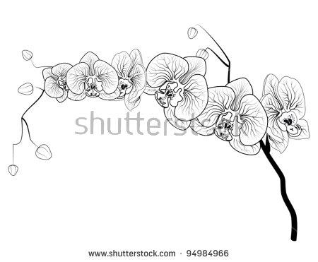 Phalaenopsis Vectores, imágenes y arte vectorial en stock.