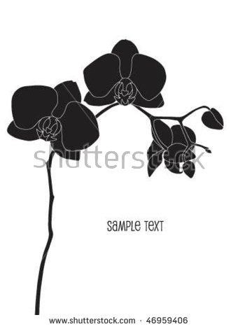 Phalaenopsis Orchid Stock Vectors, Images & Vector Art.