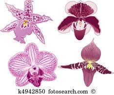 Phalaenopsis Clipart Royalty Free. 225 phalaenopsis clip art.