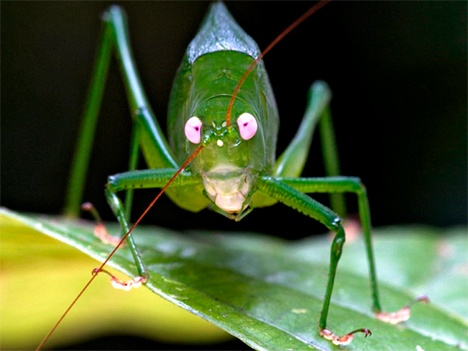 1000+ images about Katydids on Pinterest.