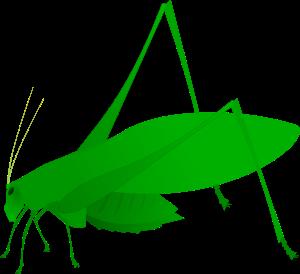 Amblycorypha oblongifolia.