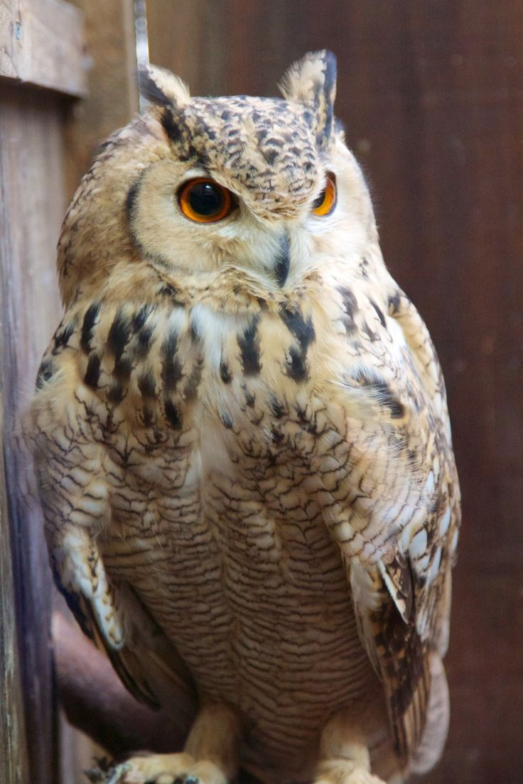 1000+ images about Owl's on Pinterest.