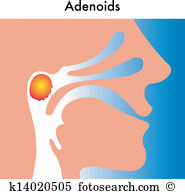 Pharyngeal Clip Art Vector Graphics. 18 pharyngeal EPS clipart.