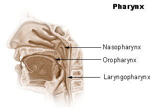 Pharyngeal Diseases.