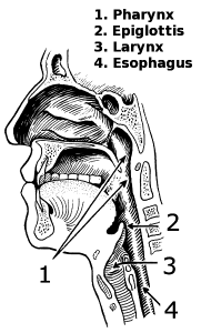 Mouth And Throat Clip Art Download.