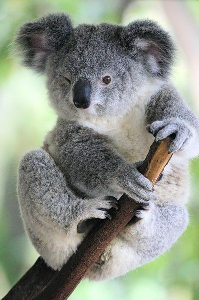 1000+ ideas about Que Es Marsupial on Pinterest.