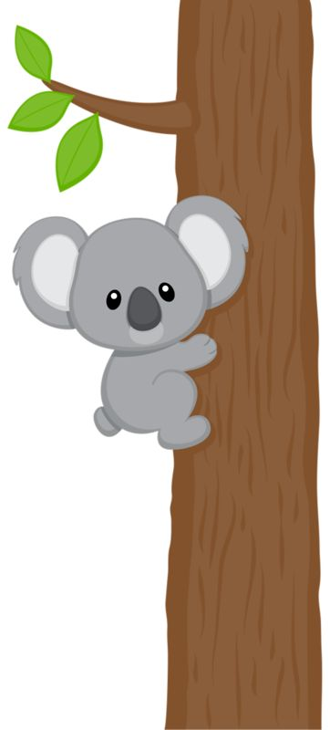 1000+ images about Koalas on Pinterest.