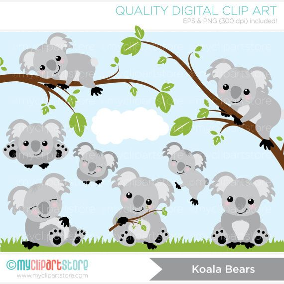 1000+ images about Cute koalas on Pinterest.