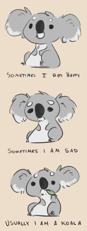1000+ images about Koala Bears on Pinterest.