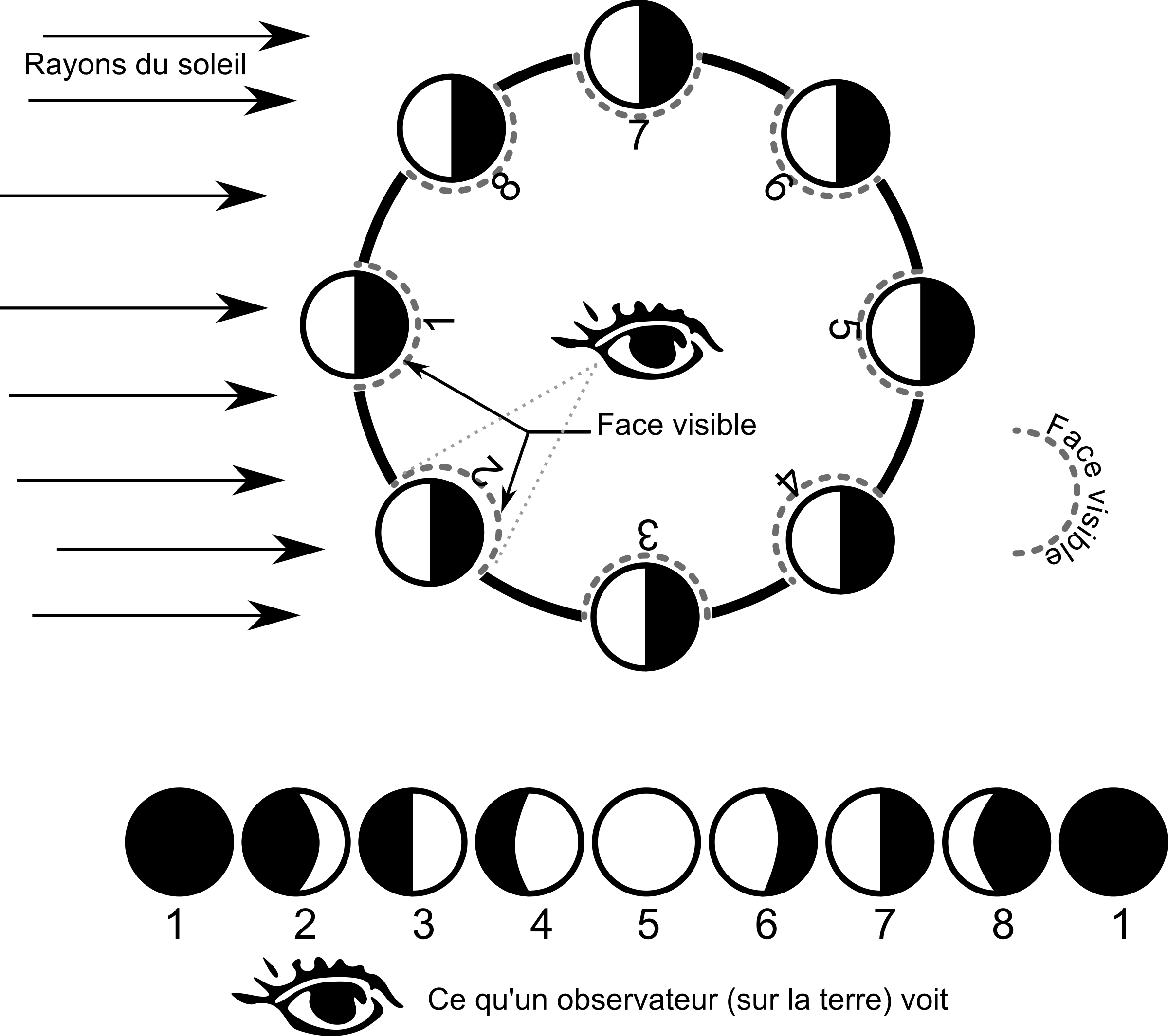 Moon Cycle Clipart.