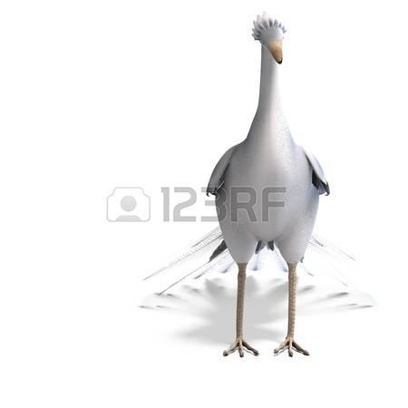 60 Phasianidae Stock Vector Illustration And Royalty Free.