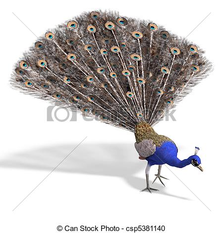 Phasianidae Illustrations and Stock Art. 62 Phasianidae.