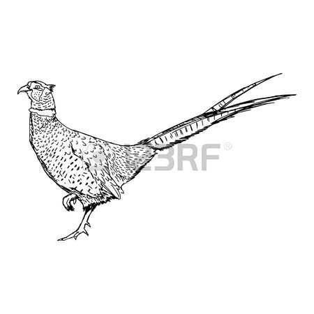 126 Pheasant Hunter Stock Vector Illustration And Royalty Free.