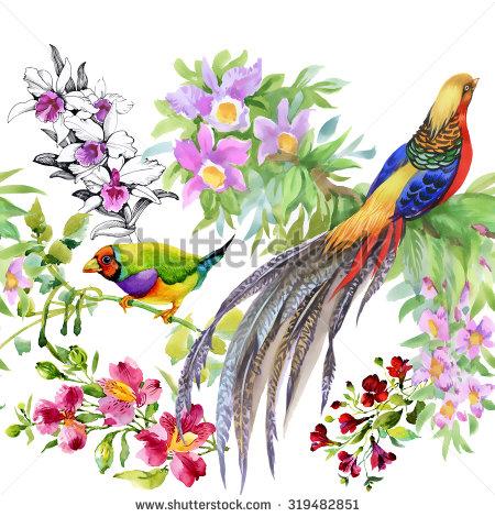 Tropical Pheasant Stock Photos, Royalty.