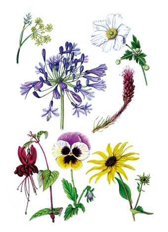 1000+ images about floral on Pinterest.