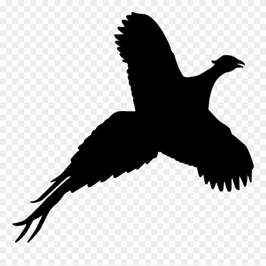 Pheasant Flying Silhouette Transparent Background.