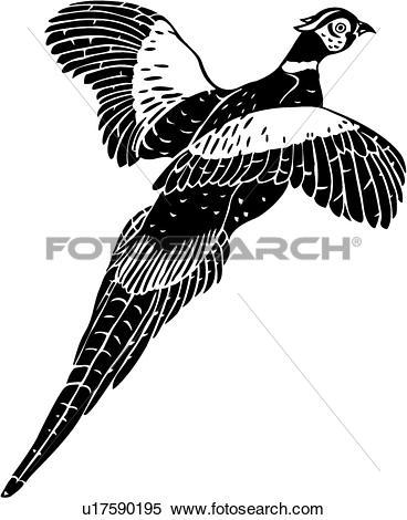 Pheasant Clipart Illustrations. 370 pheasant clip art vector EPS.
