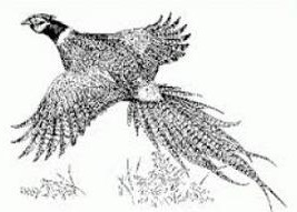 Free Pheasant Clipart Black And White, Download Free Clip.