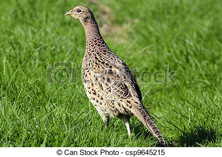 Stock Images of Wildlife Photos.