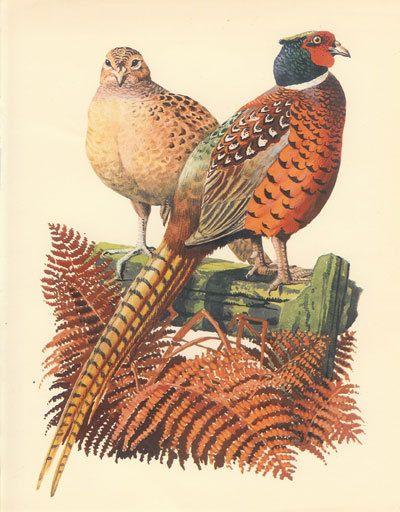 tunnicliffe a book of birds.