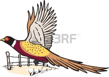 1,013 Pheasant Stock Vector Illustration And Royalty Free Pheasant.