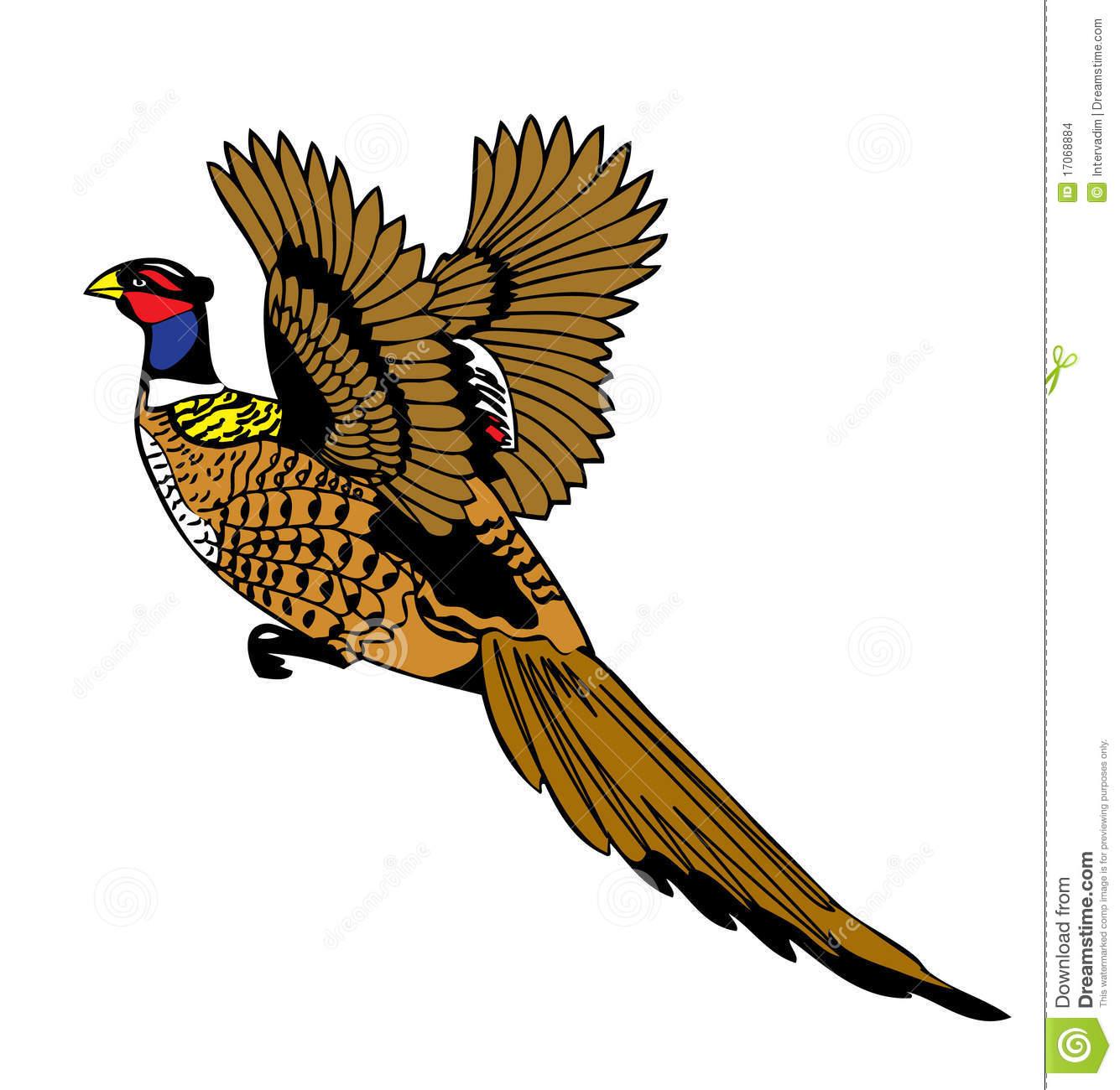Pheasant Stock Illustrations.