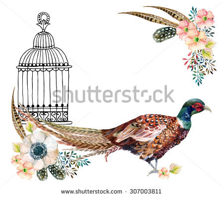 Pheasant Tail Feather Stock Photos, Royalty.